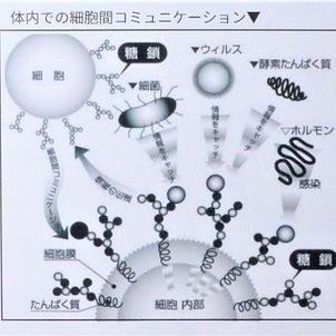 細胞のアンテナ「糖鎖」のチカラの画像