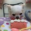 ☆ケーキを食べるりこちゃん☆の画像