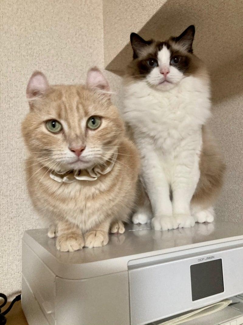 白猫みゃーこ ブログ