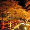 紅葉がはじまる季節の画像