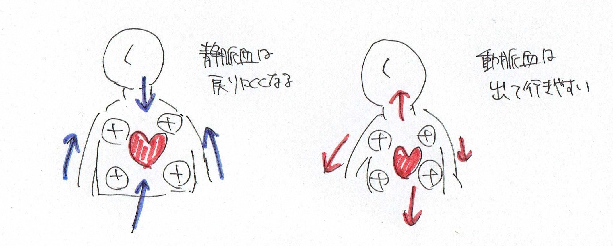 ファロー 四 徴 症 覚え 方