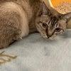 のりちゃん、サリー、➕猫探しています!の画像