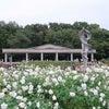 第97回「神代植物公園~深大寺 散策」の画像