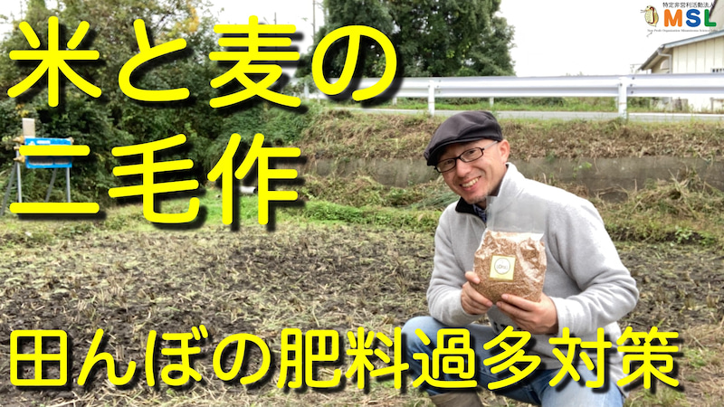 米と麦の二毛作(田んぼの肥料過多対策) | はかせの科学日記〜南相馬 ...