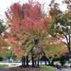 秋色の画像