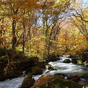 恋しい秋の山ガール旅【奥入瀬渓流】の画像