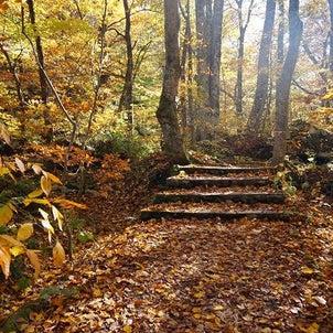 恋しい秋の山ガール旅【奥入瀬渓流を歩く】の画像
