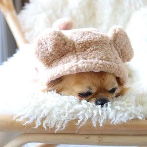 【犬との暮らし】クマ になれるかわいいワンコ服。の画像