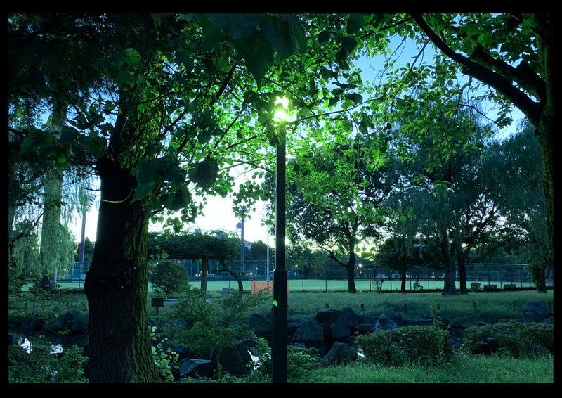 伝説の!幸運を呼ぶ緑の光☆グリーンフラッシュ(green flash)早朝の綾瀬東公園で観た!6