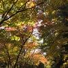 秋の道東で…の画像