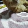猫の8歳は・・・の画像