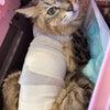 サリー退院して帰って来ましたの画像