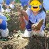 サツマイモ掘りにの画像