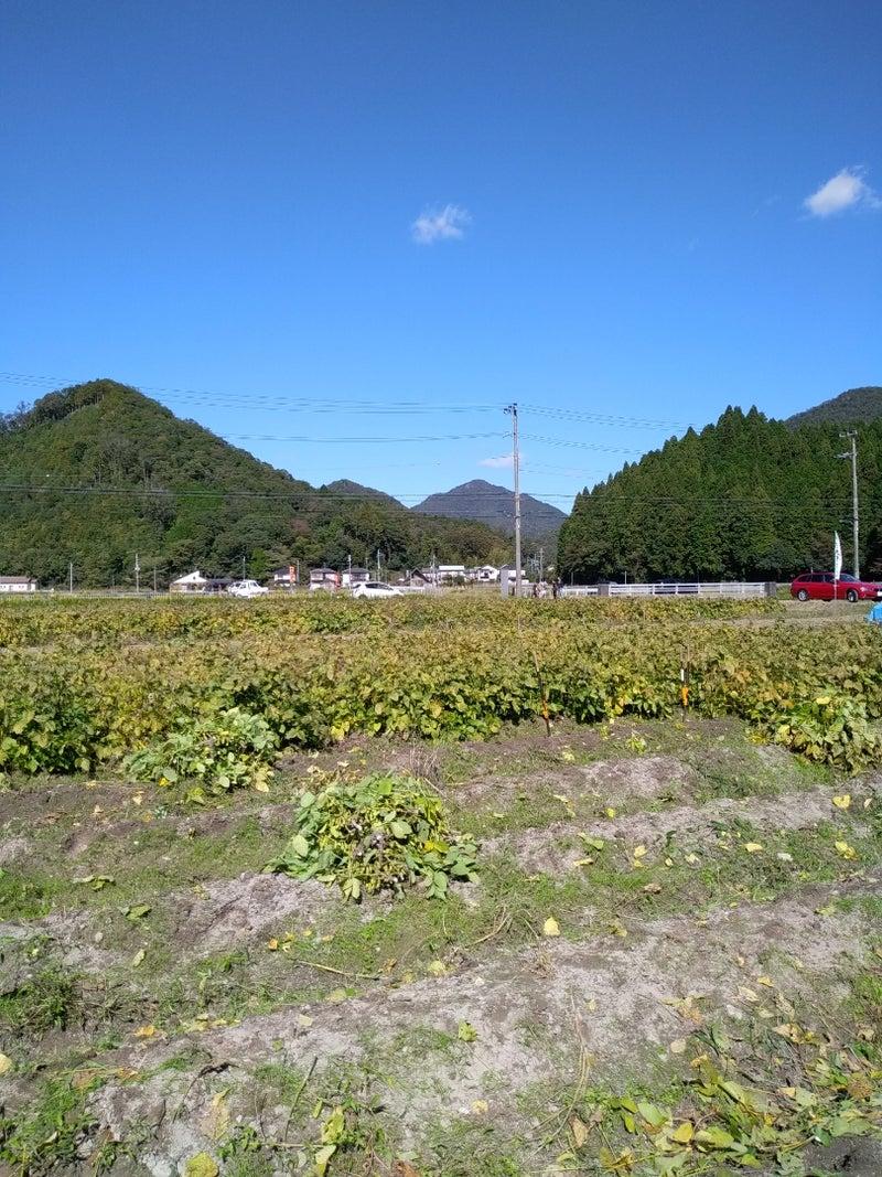 篠山 狩り 丹波 黒豆