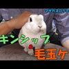 うさぎのきわみシリーズの毛玉ケアトリーツを食べた動画をYouTubeに公開しました️Y...の画像
