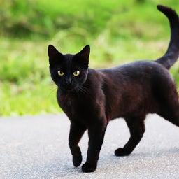 画像 黒猫とテレパシー の記事より