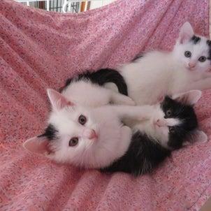 野良猫が子猫を生んだらどうする?の画像