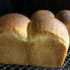 キタノカオリで焼いたパンドミの画像