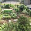 家庭菜園の記事(4件)の画像