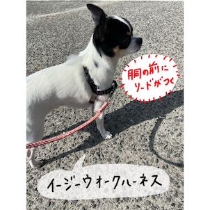 楽天ポイント高いDAY!お散歩上手になるハーネスを買う。の画像