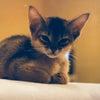 愛する猫の旅立ちの画像