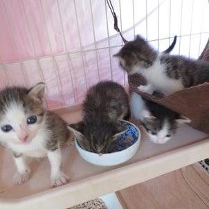 獣医師と考えるTNR(猫ボラ育成プログラム4)の画像