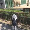 家族で動物園♡の画像