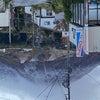 初冠雪の画像