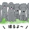 2020/11/05(木) 絵日記 アジフラたちの画像