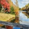 プリンスエドワード島からの紅葉便りの画像