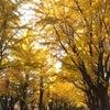 知床五湖高架木道の画像