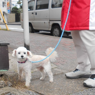 *お散歩日和*の画像