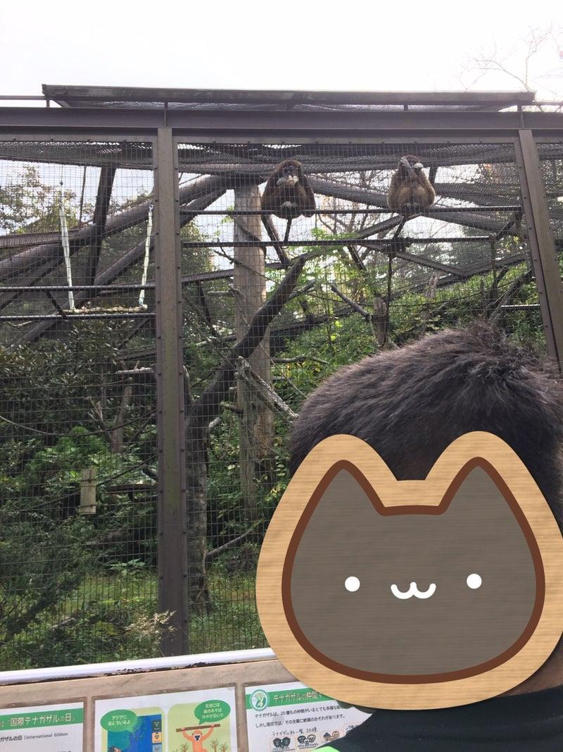 o0960128014846772136 - 11月7日(土)☆toiro金沢文庫21☆