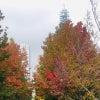 緑と紅葉の美しい日比谷公園&みなとみらい~akisanpo.photoの画像