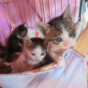 赤ちゃん、子猫になりましたの画像