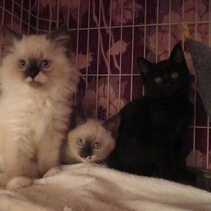かわいい猫が20匹以上いますの画像