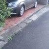 洗車した水が~!の画像