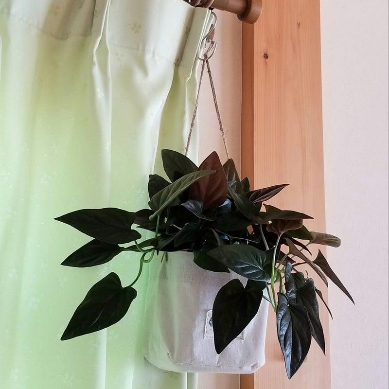 冬 越し 植物 観葉