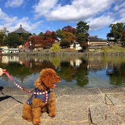 画像 奈良公園で紅葉! の記事より 9つ目