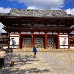 画像 奈良公園で紅葉! の記事より 21つ目