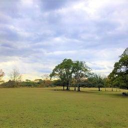画像 奈良公園で紅葉! の記事より 33つ目