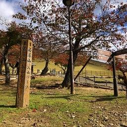 画像 奈良公園で紅葉! の記事より 27つ目
