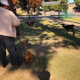 画像 奈良公園で紅葉! の記事より 6つ目