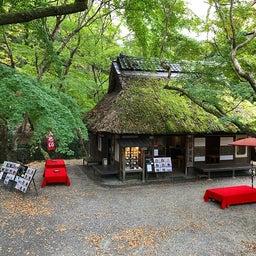 画像 奈良公園で紅葉! の記事より 28つ目