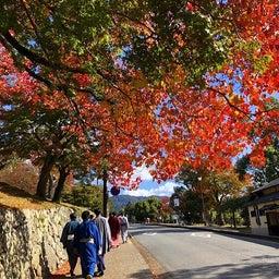 画像 奈良公園で紅葉! の記事より 13つ目