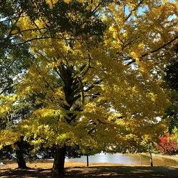 画像 奈良公園で紅葉! の記事より 25つ目