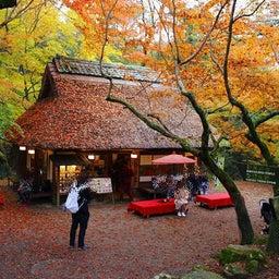 画像 奈良公園で紅葉! の記事より 29つ目