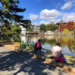 画像 奈良公園で紅葉! の記事より 8つ目
