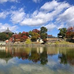 画像 奈良公園で紅葉! の記事より 7つ目