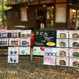 画像 奈良公園で紅葉! の記事より 30つ目